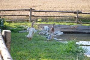 Tiere auf dem Thalhauser Hof in Niederbayern